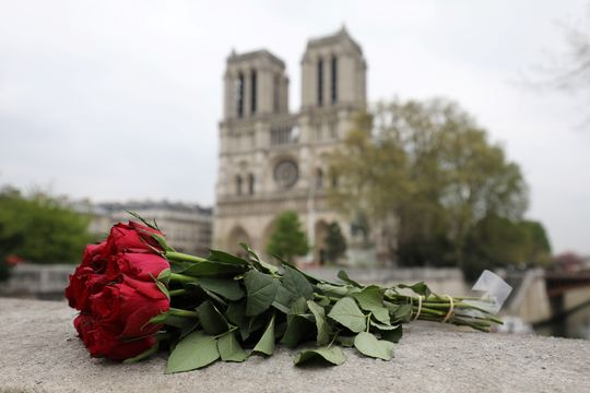 Roses in front of Notre Dame