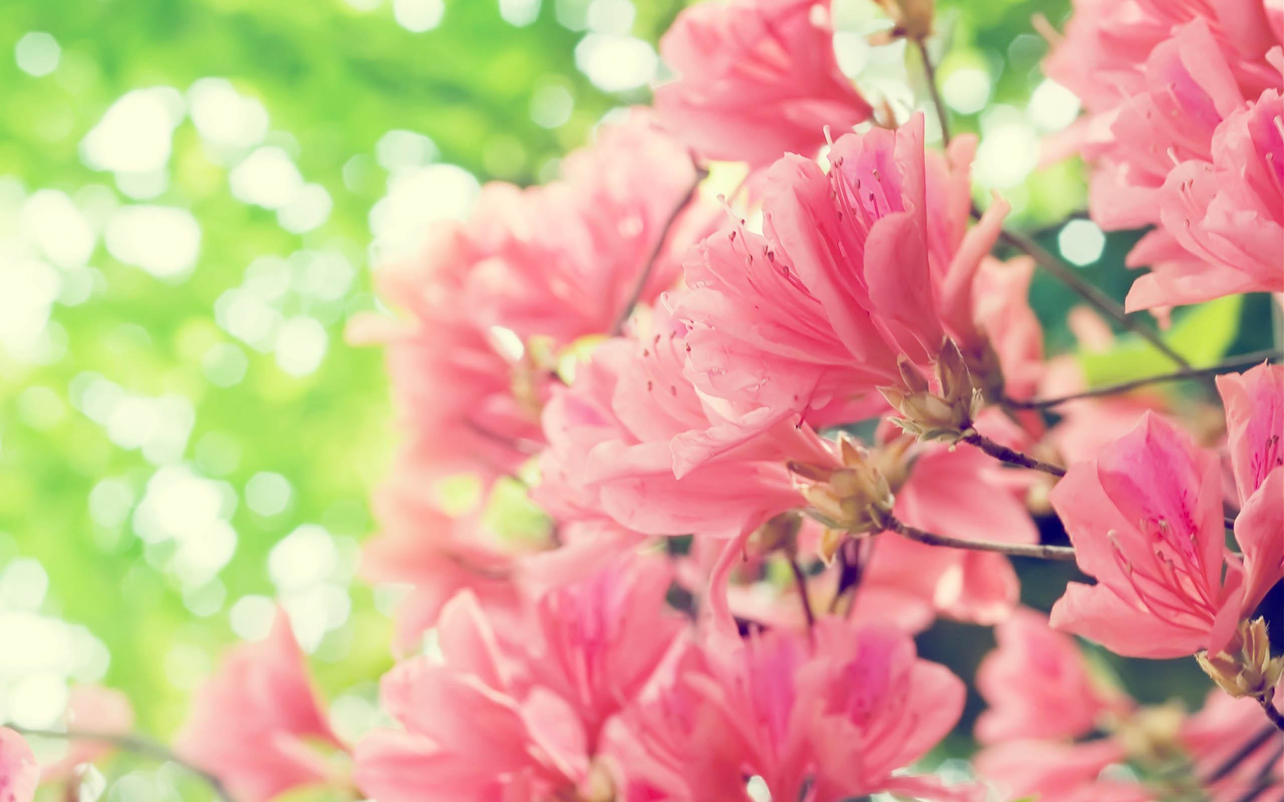Spring perfume irish tatler mightylinksfo